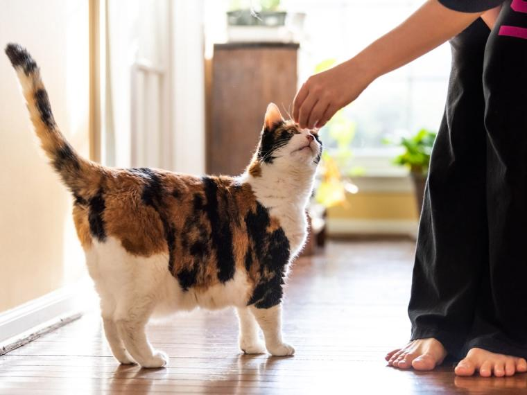How to prevent your cat from urinating on the carpet