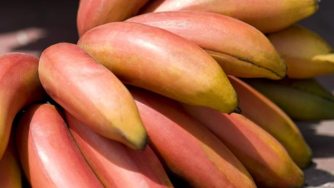 The new banana from the Canary Islands is red and, if it is good, it tastes like raspberry