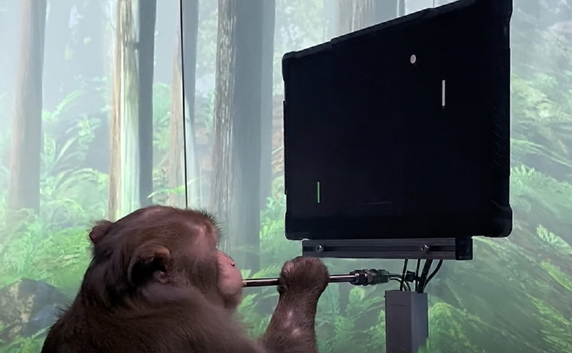 With chips in his brain, monkey controls video game with his mind